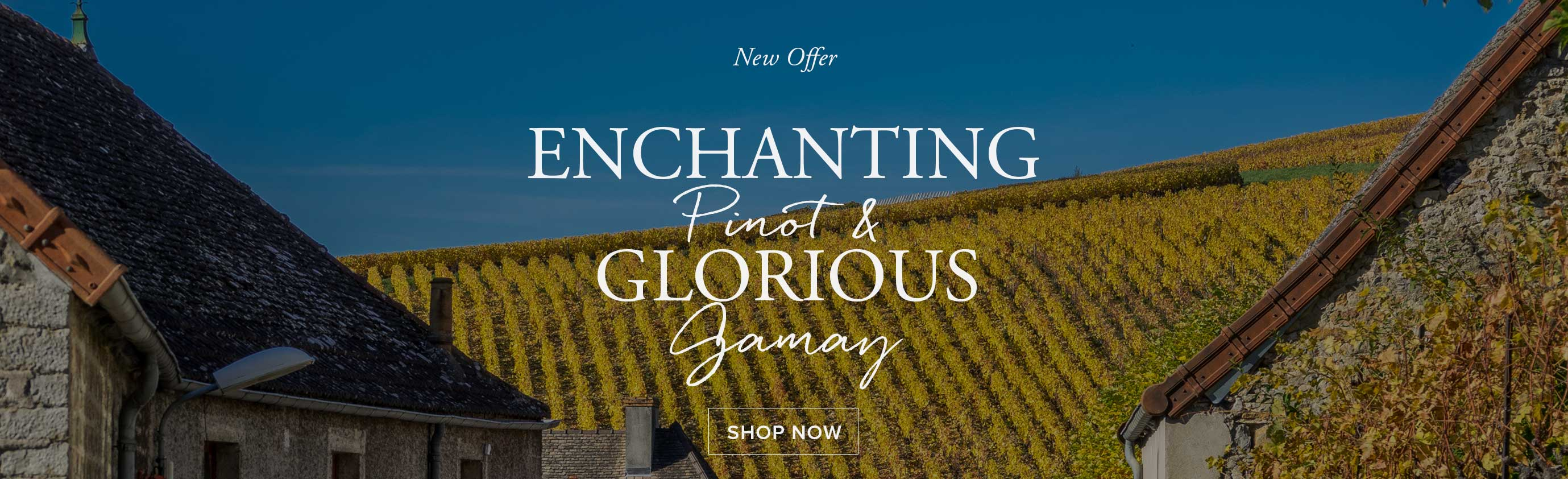 New Offer - Enchanting Pinot Noir and Glorious Gamay
