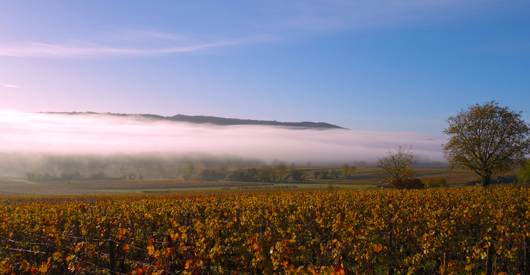 Burgundy En Primeur