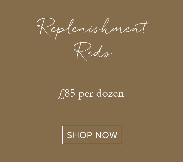 REPLENISHMENT REDS - DOZEN