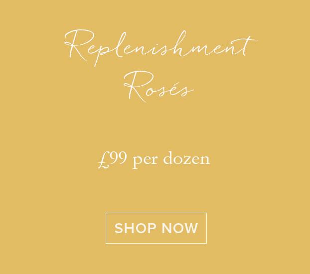 Replenishment Roses